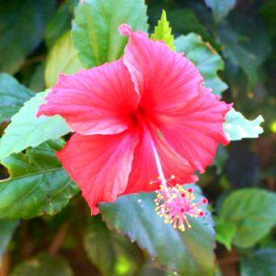 flower-and-leaf
