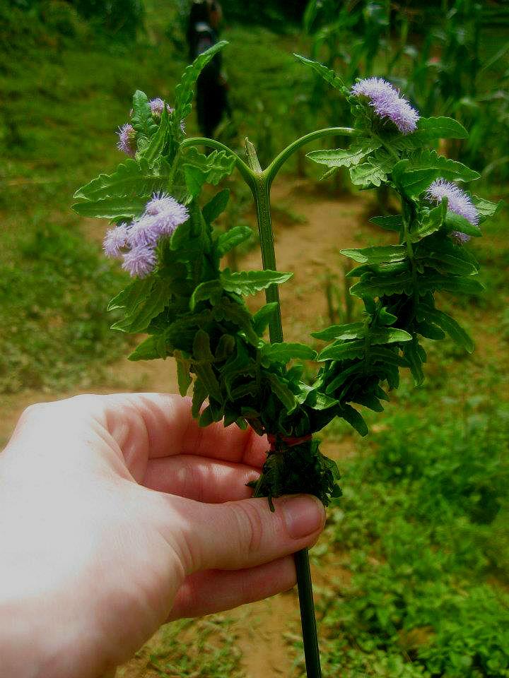 flower-gift