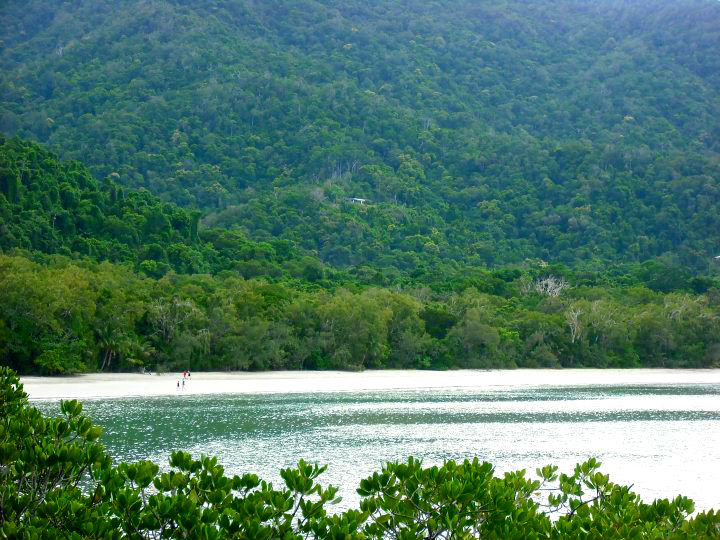 Daintree rainforest – Cape Tribulation